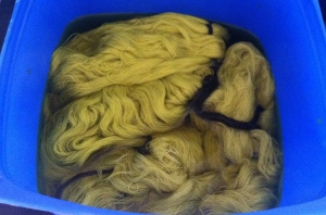 Dye bath with silk and alpaca in it.  The silk takes the colour slightly better