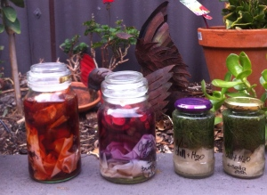 From left to right: Cotton in onion skins and water; cotton in purple carrot and water; silk with dill and water; silk with dill and water and soda ash.